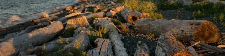 driftwood beach 1:4
