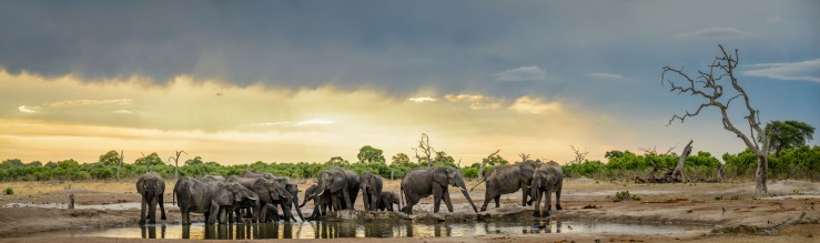 Elephant herd at watering hole sunset 1x3.5