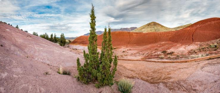 juniper and rhyolite make a colourful landscape