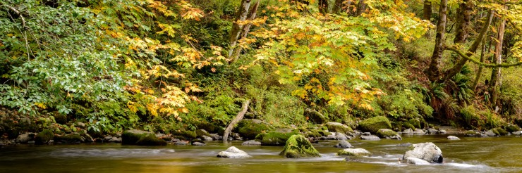 Autumn colours along the Quinsam River in Campbell RIver