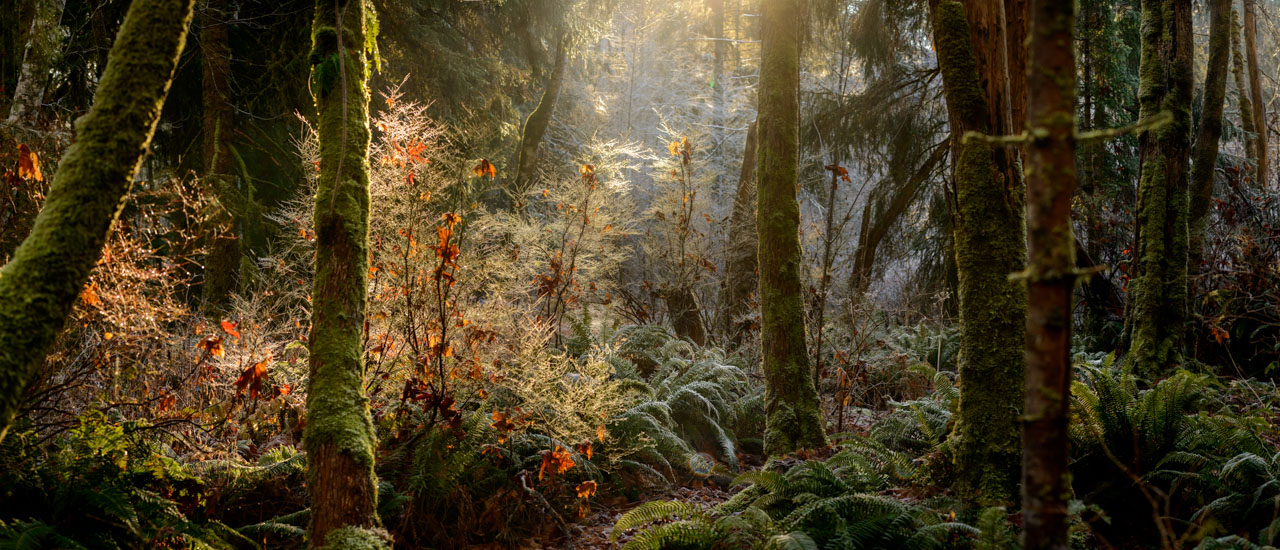 Mystical forest scene during winter with dreamy lighting