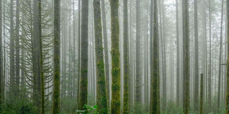 mist shrouds a forest