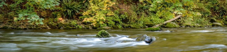 Quinsam river scenic image