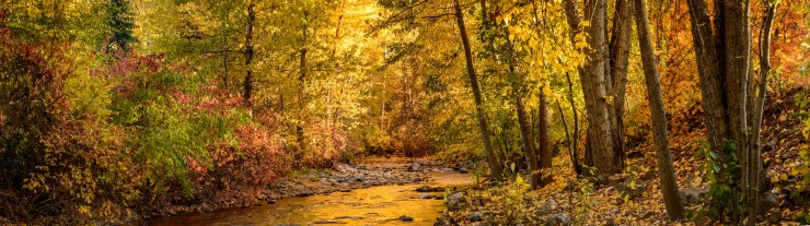 Colourful trees along Chase Creek in the Fall