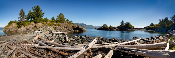 driftwood on rocks at friendly cove, nootka island.