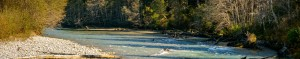 High resolution panoramic image of oreford river with a grizzly bear