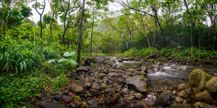 river in tropical jungle in hawaii