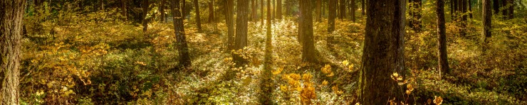 Sunlight streaming through forest with fall colours