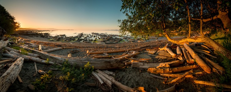 logs and trees on beach on hornby island.