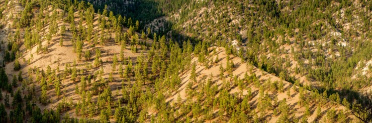 Scree slope on thompson river with pine trees