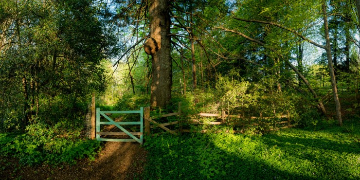 Green gate on forest path.