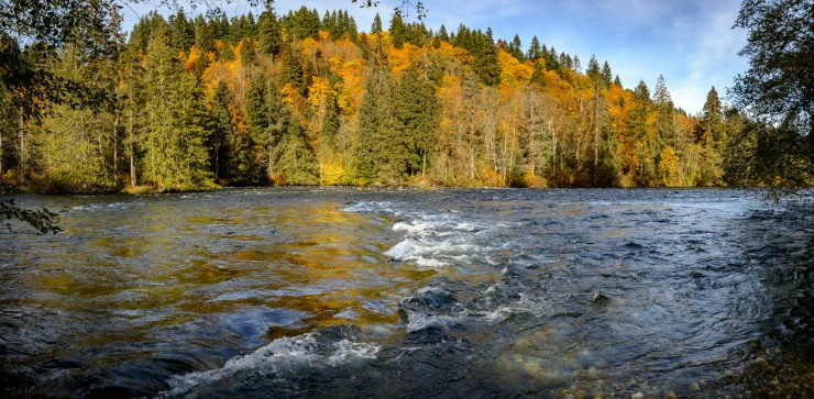 Campbell RIver in Autumn