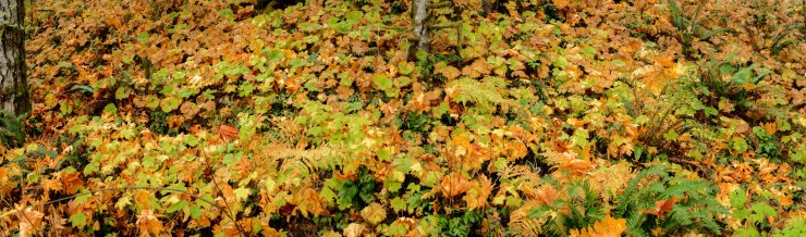 Autumn colours on the forest floor
