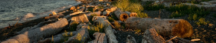 piles of driftwood on beach