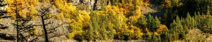 fall colours along the Fraser Canyon