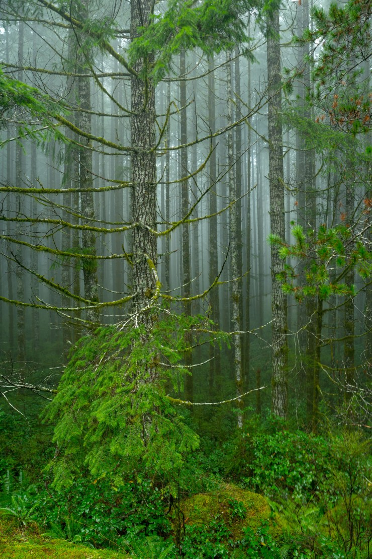 fog in forest near campbell river