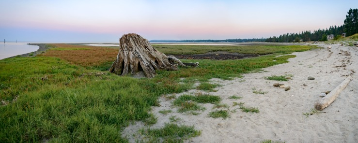 Stump and grasses on beach at sunset
