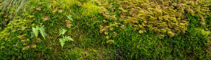 dense moss and ferns