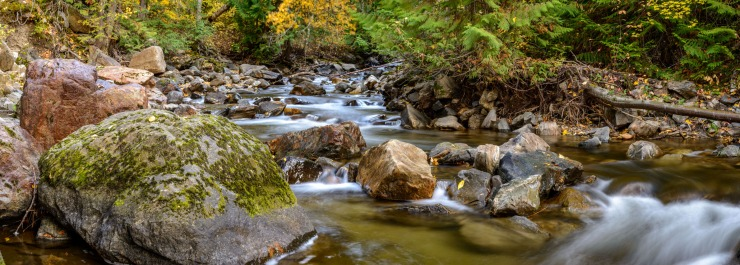 Chase creek with mossy rocks and fall foliage