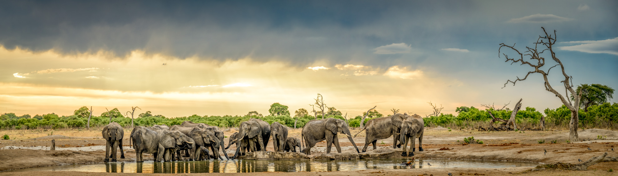 high res stitched panoramic wildlife image.